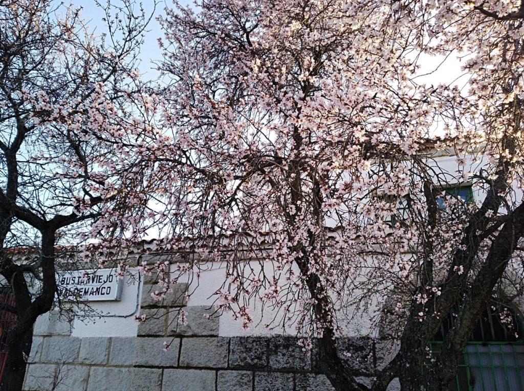 xarbol-flor2-min